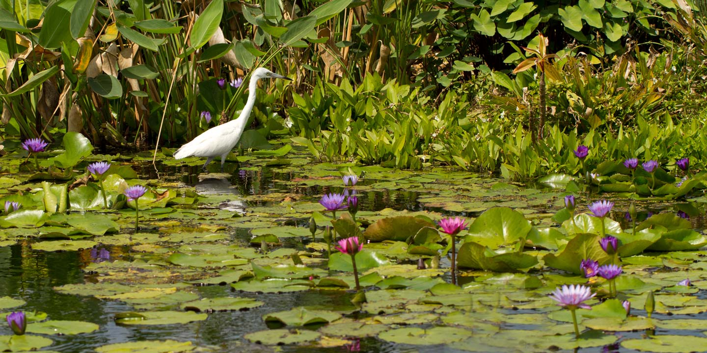 Naples Florida botanical garden with a crane.